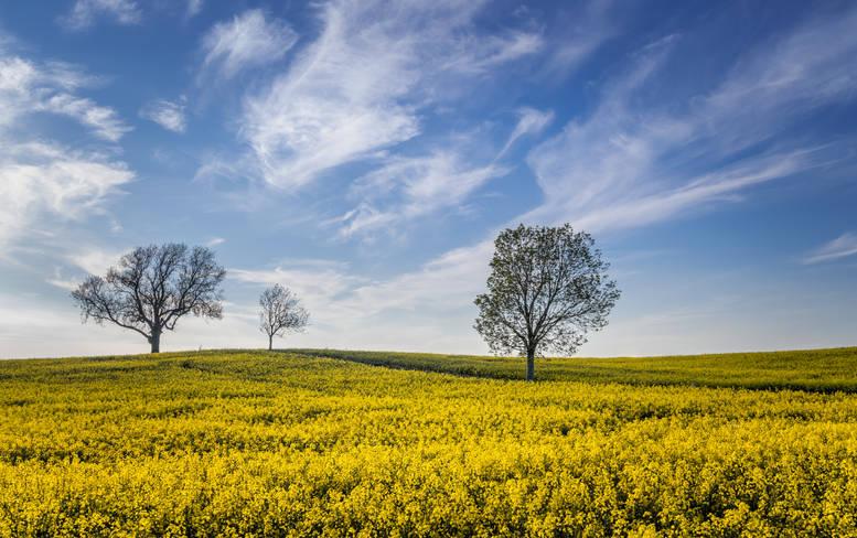 Fields of Cheerfulness (Ref: 1462)