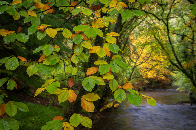 Autumn Starts (Ref_ 2491)