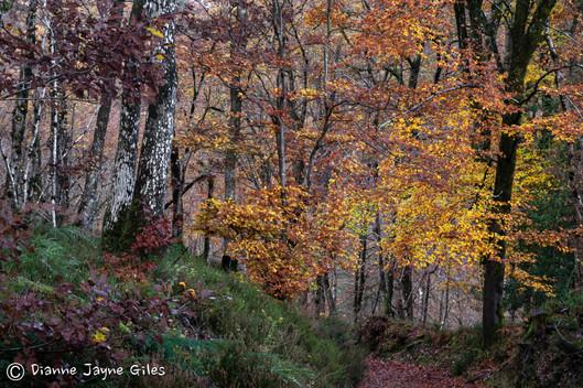 Autumn at Fingle (Ref_ 3678)
