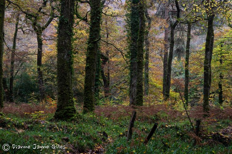 Great Lot Woods - Autumn (Ref_ 3334-2)