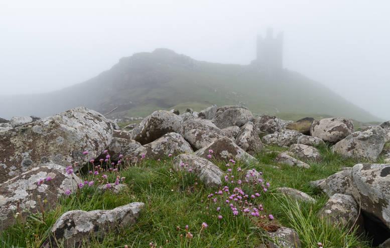 Misty Morning at Dunstanburgh (Ref: 1213