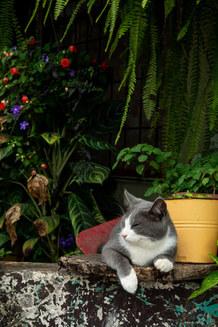 Costa Rican Cat