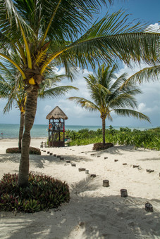 Palm Tree Pathway
