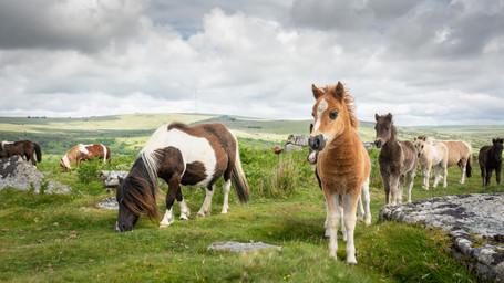 Heckwood Foals