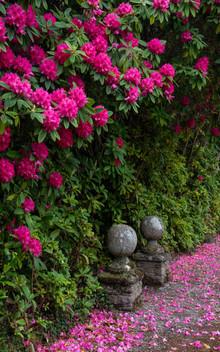 Lukesland Gardens (Ref_ 9648)