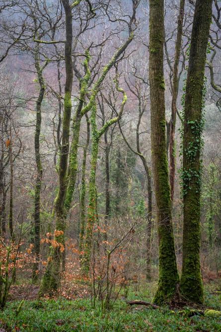 Lydford Woods