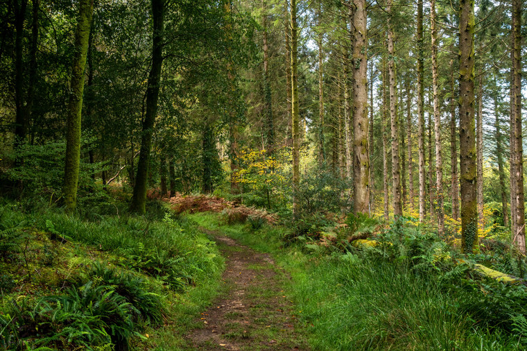 Buckland Abbey Woods (Ref: 1028)
