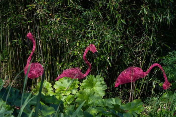 Flamingoes (Ref: 9635)