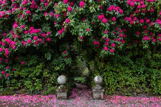 Lukesland Gardens (Ref_ 9640)