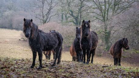 Soggy Ponies (Ref: 9047)