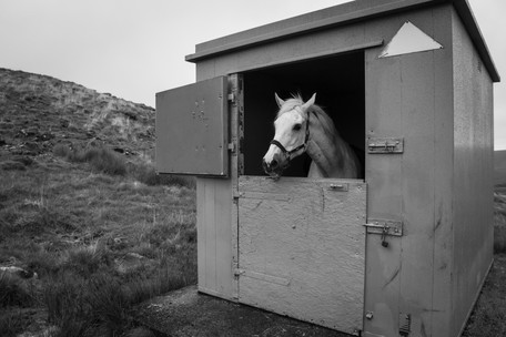 Ranger Horse