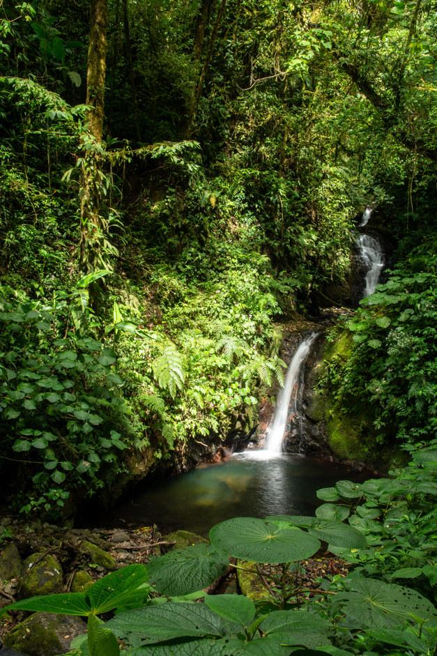 Monte Verde Waterfall