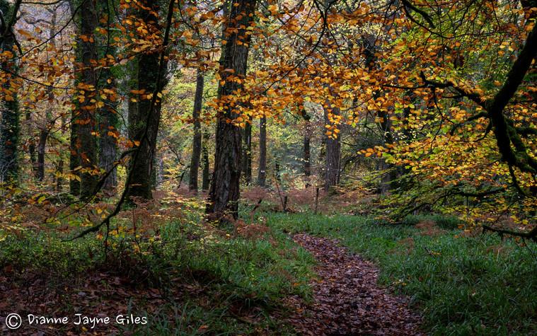 Great Lot Woods - Autumn II (Ref_ 3336-2