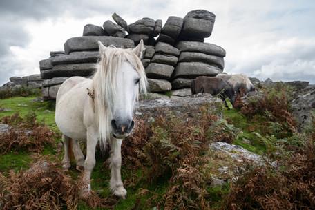 Pew Tor Pony (Ref: 8119)