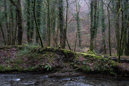 Lydford Winter Woods