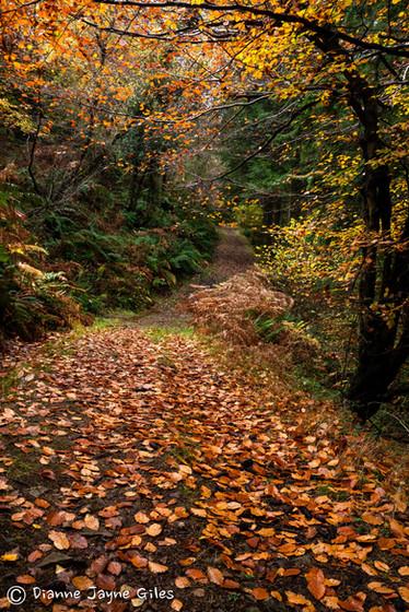 Copper Pathway(Ref_ 3694)