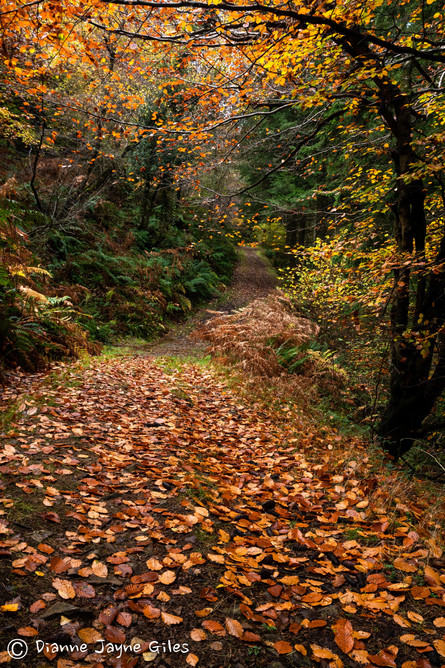 Copper Pathway(Ref: 3694)