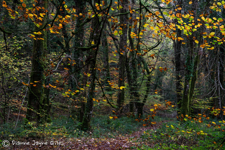 Great Lot Wood (Ref_ 3318-2)
