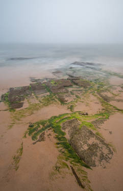 Sea Mist (Ref: 1226)