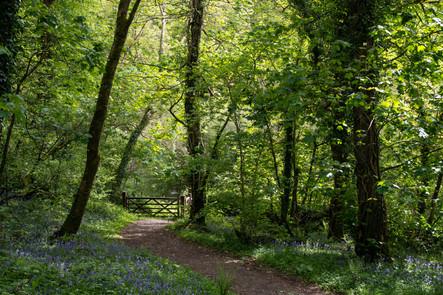 Grenofen Woods Landscape
