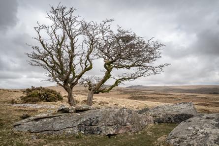 Barn Hill Tree