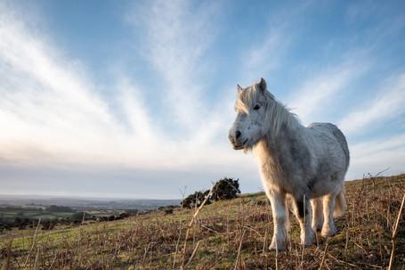 Stripy Pony (Ref: 0231)