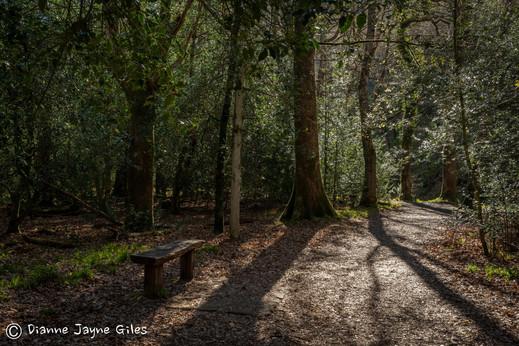 Fingle Woods (Ref_ 8738)