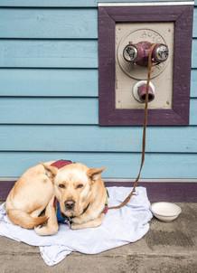 Juneau Dog