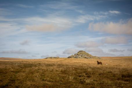 Longaford Tor Landscape