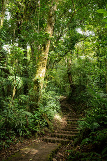 Monte Verde Pathway