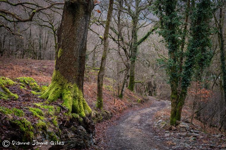 Winter Woods (Ref_ 7585)