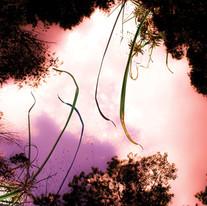Above&Below_BackyardInvasiveWeeds_72dpi.