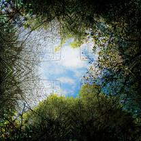 Above&Below_BackyardInvasivePlantMandala