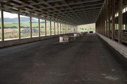 White River Dairies - Dairy Operation-9428