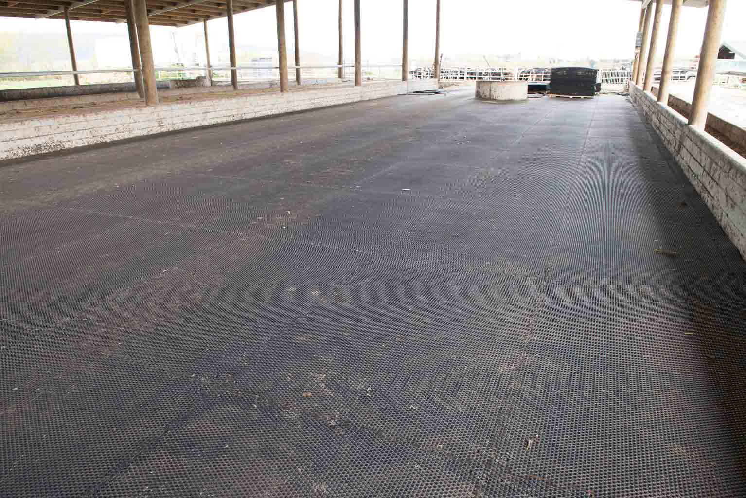 Cow shed with rubber mat flooring