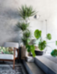 house-plants-for-living-room-indoor-idea