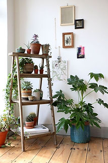 scenic-best-ideas-about-indoor-plant-dec