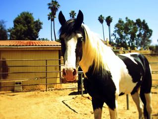 Meet Our Horse, Ride'em