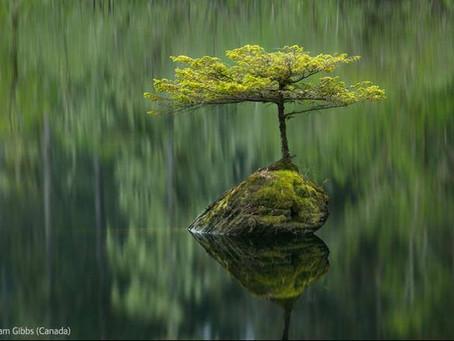 """En Primavera Nutrir """"el Crecimiento"""""""