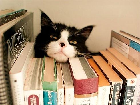 Cat%20and%20books_edited.jpg