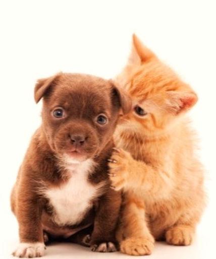 Puppies_Kittens_edited_edited.jpg