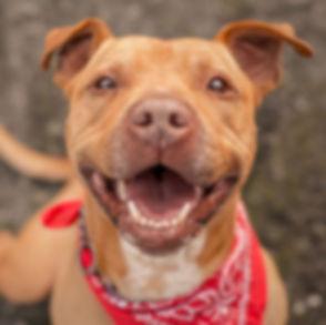 Dog smiling 1.jpg