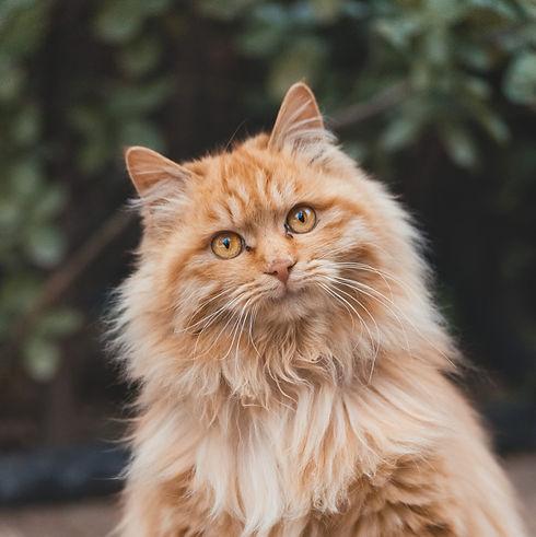 Orange cat_edited.jpg