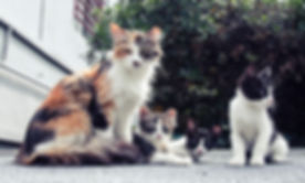 Feral-cats.jpg