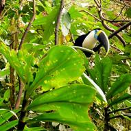 ECUATORIAN AMAZON