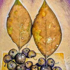 Thirteen Fruits