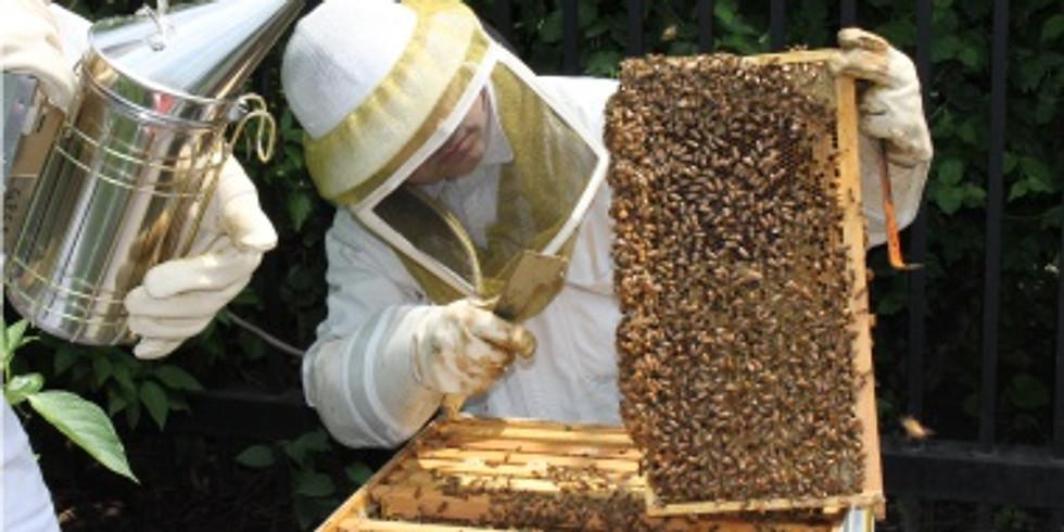 FREE Garden Lecture: Beginner Beekeeping & Honeybees