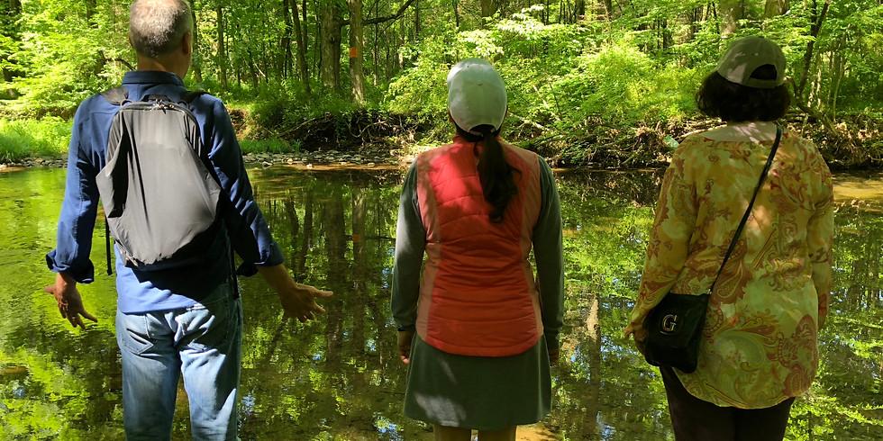 Walking & Meditation Experience thru Whittemore