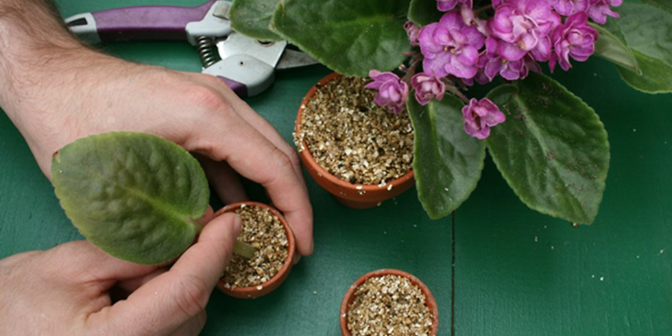 Creating Your Own Plants - Free Plant Propagation Hands-On Workshop