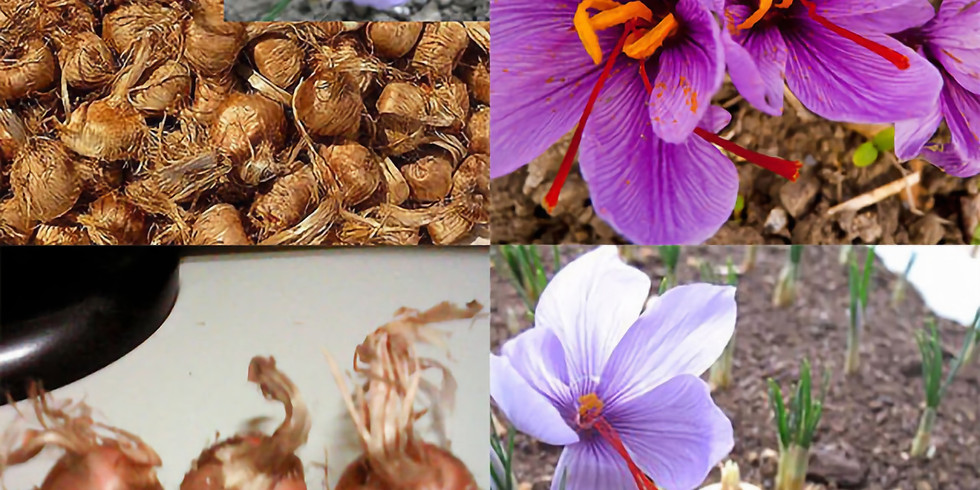 FREE Garden Lecture: Growing Bulbs for Spring & Fall